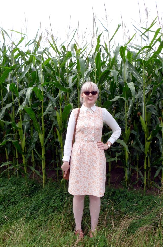 tatton park maize maze